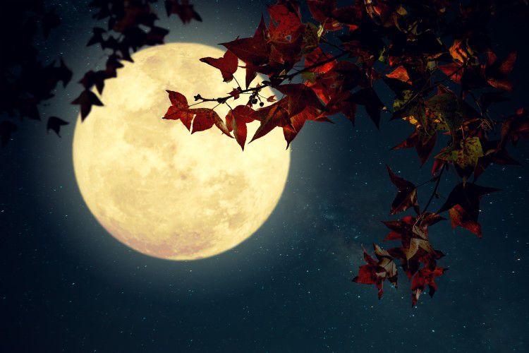 """""""秋の月"""""""